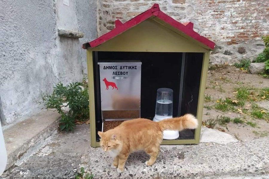 Στέγη και φαγητό για τα αδέσποτα ζώα
