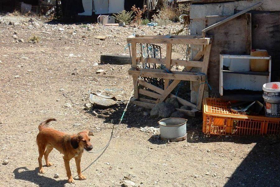 «Καμπάνα» 1000 ευρώ σε κάτοικο της Εφταλούς για βαρελόσκυλα