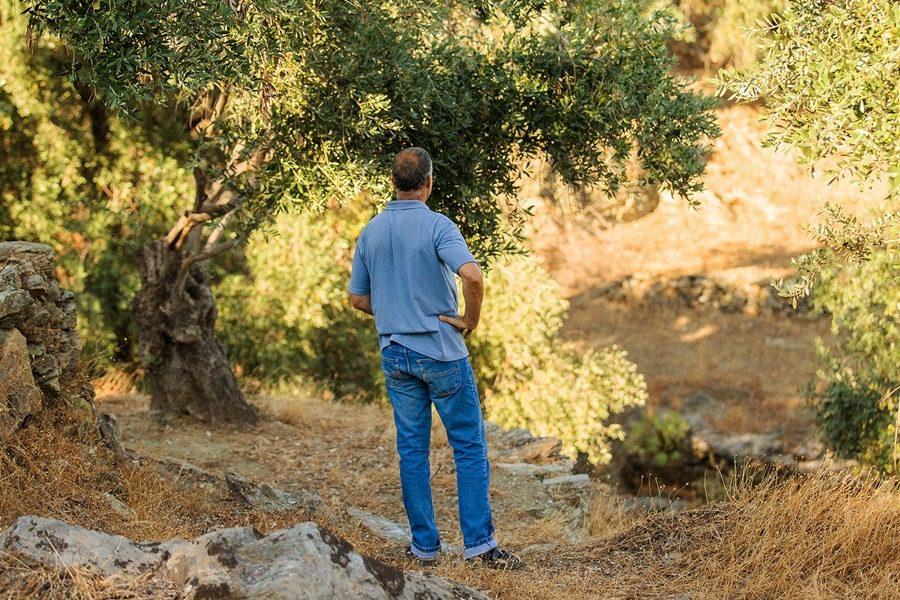 «Υιοθετήστε MIA ELIA, με αγάπη για την καλλιέργεια και την παραγωγή λαδιού»