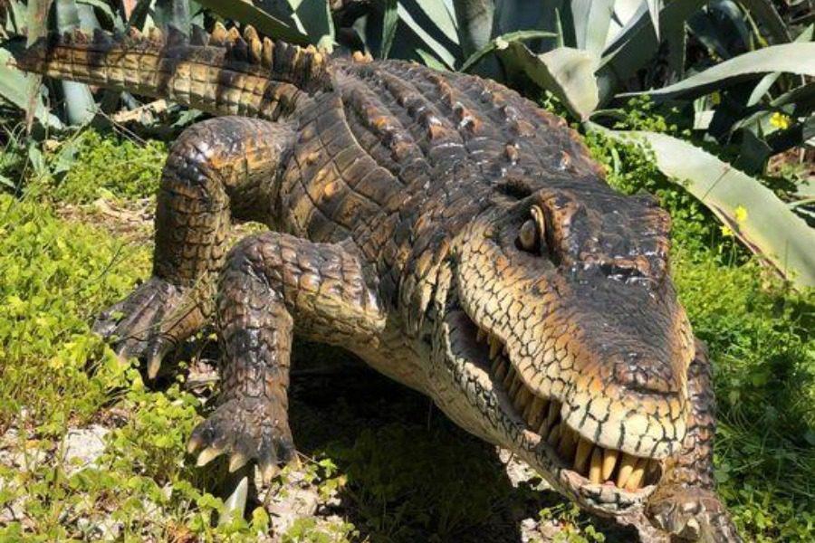 Ο αλιγάτορας της Λιώτας και άλλα θαυμαστά στο Μουσείου Φυσικής Ιστορίας