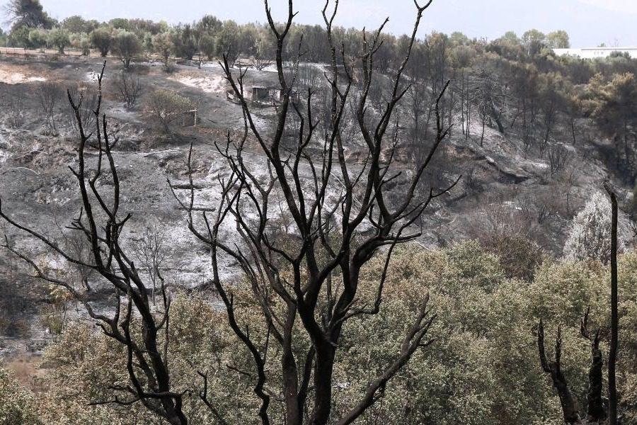 Κάηκαν 60.000 στρέμματα μέσα σε 4 μέρες