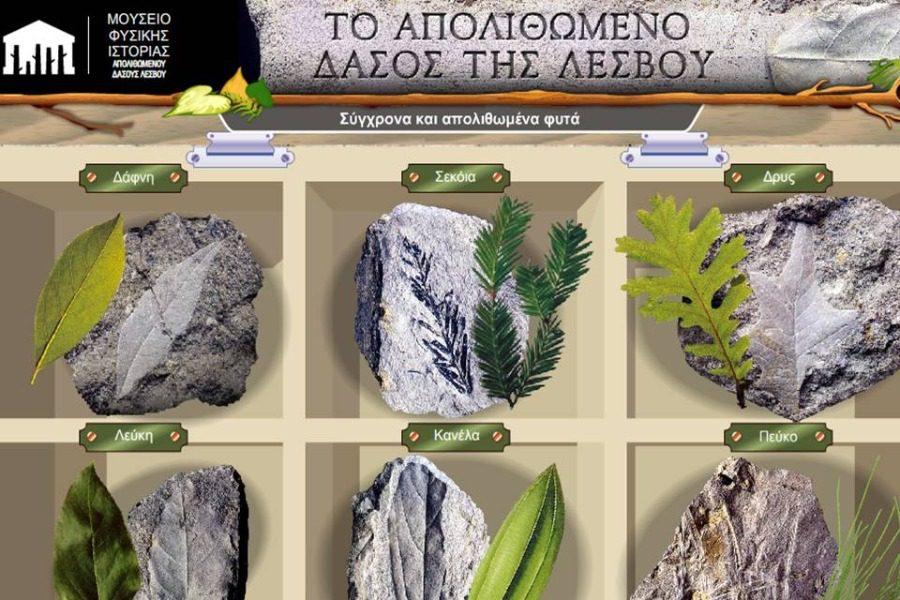 Γνωρίστε τα απολιθωμένα και σύγχρονα φυτά της Λέσβου