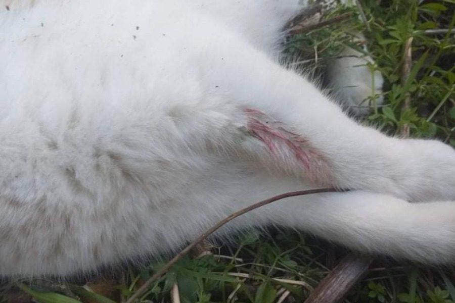 50χρονος κατά αδέσποτης γάτας