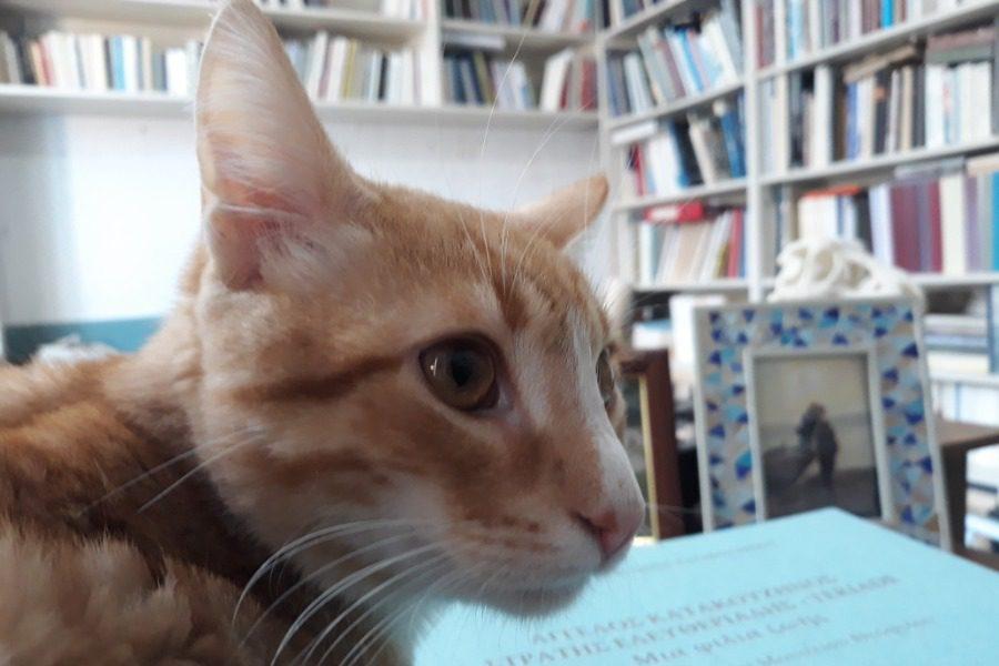 ΙΣΤΟΡΙΕΣ ΤΗΣ ΚΑΡΑΝΤΙΝΑΣ: Κοιμάμαι πάνω σε κάτι παλιοκαιρίτικα βιβλία