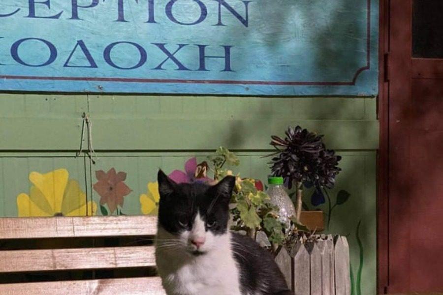 Και τώρα, τι θα απογίνουν 200 γάτες στον Καρά Τεπέ;