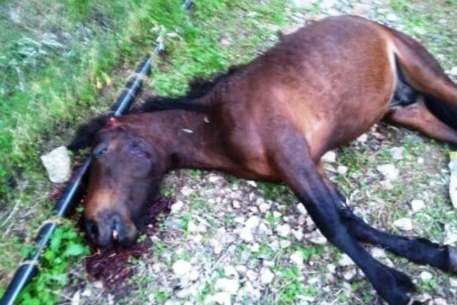 Eκτέλεσαν άλογο με πυροβολισμό στο Ίππειος