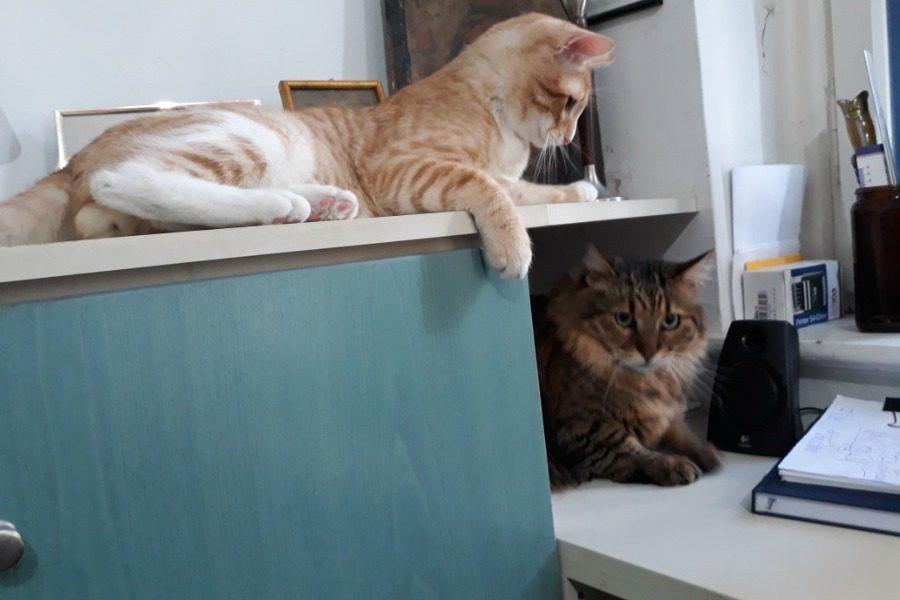 ΙΣΤΟΡΙΕΣ ΚΑΡΑΝΤΙΝΑΣ:Οι γάτοι δεν παθαίνουν κορονοϊό. Γκέγκε;