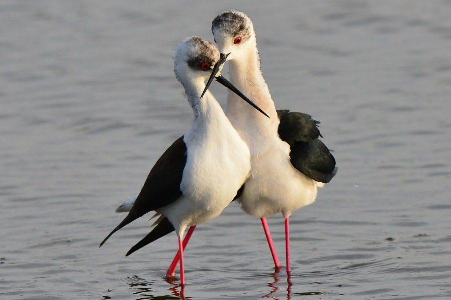 Σαββατοκύριακο με παρατήρηση πουλιών