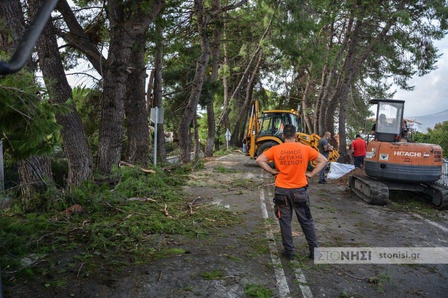 Αντικαθιστούν τα κομμένα δέντρα στη Δυτική Λέσβο