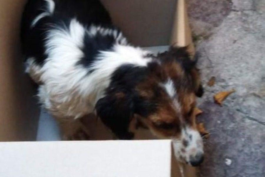 Θανάσιμος τραυματισμός και εγκατάλειψη σκύλου στην Αγιάσο