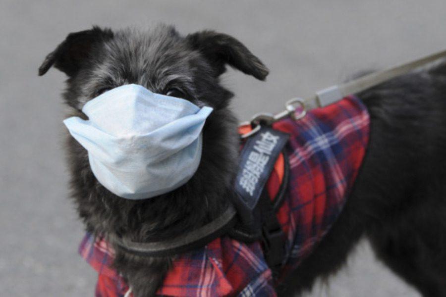 Όχι, δεν πέθανε κανένας σκύλος από κορονοϊό