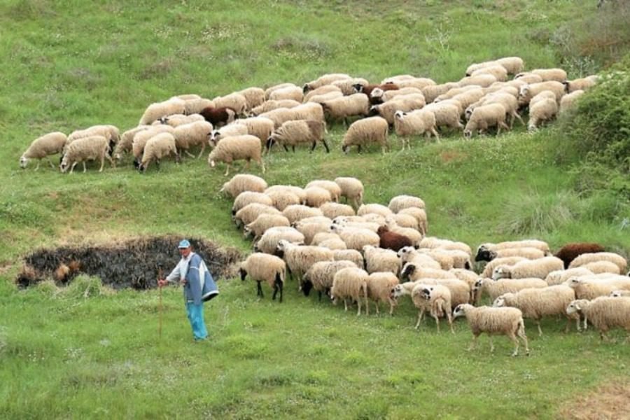 Eνίσχυση από τον ΟΠΕΚΕΠΕ σε κτηνοτρόφους της Λέσβου