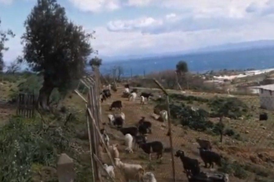 Κλοπές και σφαγές ζώων στον Καρά Τεπέ
