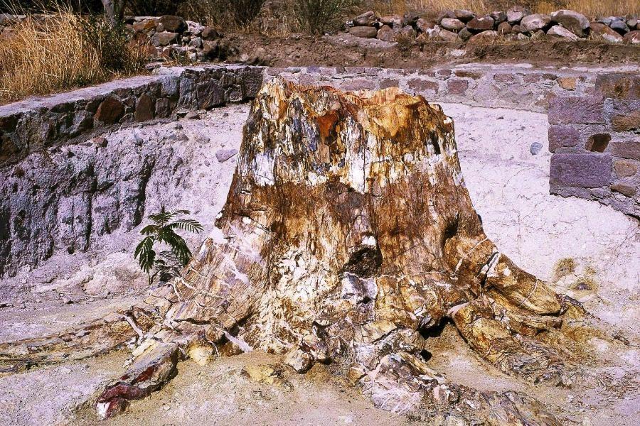 Γνωρίστε τα φυτά του Απολιθωμένου Δάσους Λέσβου