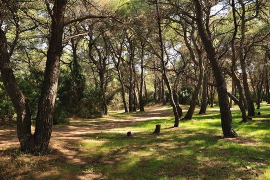 Διαχείριση ιδιωτικού δάσους, στη θέση «Βουβάρι»