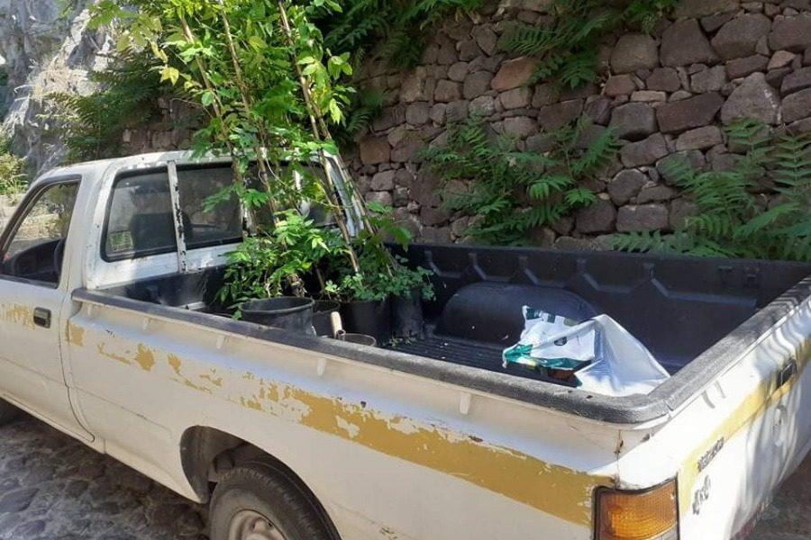 Φυτεύουν νέα σαλκίμια στο Μόλυβο