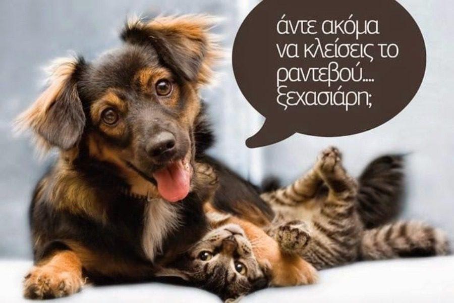 Στειρώσεις κατοικίδιων σκυλιών με 30 ευρώ