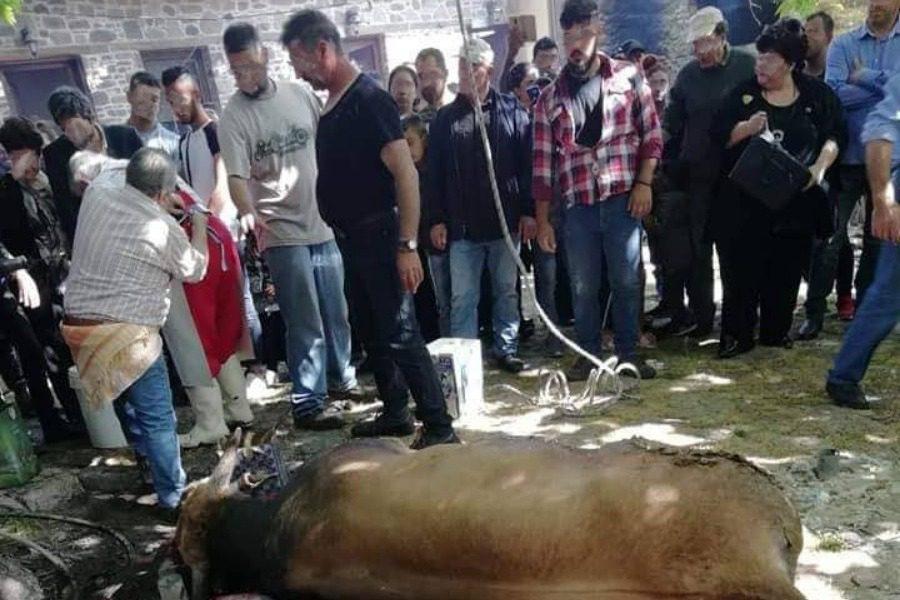 «Ξανά δημόσιες σφαγές ζώων στο Μανταμάδο Λέσβου»